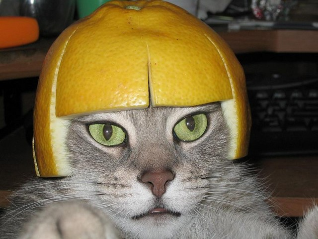 lemon_helmet_cat